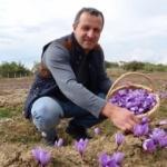 Karabük'te hasat başladı! Kilosu 30 bin lira