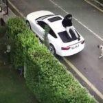 Sokak köpeği saldırınca arabanın üzerine çıktı