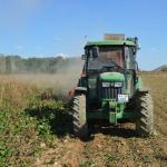 İhsaniye'de şeker pancarı hasadı başladı
