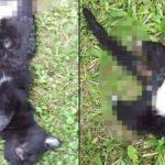 Yavru kediyi ayaklarını kesip öldürmüşler!