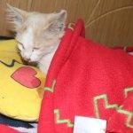 Iğdır'da ayakları kesik halde bulunan kedi tedavi altına alındı