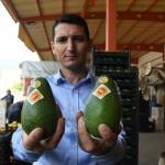 Alanyalı üreticiler Rusya'nın avokado talebine yetişemiyor