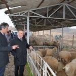 Eşme'de genç çiftçilere 238 koyun dağıtıldı