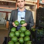 """Alanyalı avokado üreticileri """"güzelliğe"""" odaklandı"""