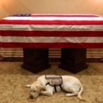 Köpeği Baba Bush'u son yolculuğuna böyle uğurladı!