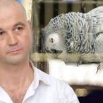 Murat Özdemir'in eziyet ettiği papağan öldü