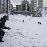 Başkentte sokak hayvanları unutulmadı