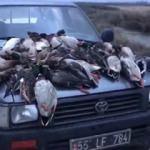Kuş cennetinde korkunç görüntü!