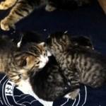 Soğukta kalan yavru kediler kurtarıldı