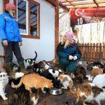 Sokak kedilerine minderli ve klimalı yuva