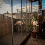 Yaralı flamingo ve yavru baykuşa evinde bakıyor