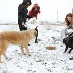 Suluova'da yaban hayvanları için doğaya yem bırakıldı