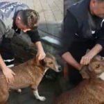 İskeleye sıkışan köpek kurtarıldı!