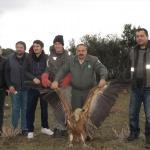 Tedavisi tamamlanan kızıl akbaba doğaya salındı