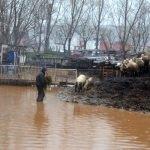 Manisa'da su basan çiftlikteki 30 hayvan telef oldu