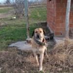 Burdur'da köpek dövüşü iddiası