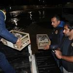Kilis'te yurt dışından kaçak getirilen 500 Hint bülbülü yakalandı