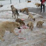 Harçlıklarıyla sokak hayvanlarına yiyecek aldılar