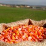 Üretim arttı: Gıda fiyatları düşecek
