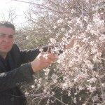 Gaziantep'te badem ağaçları çiçek açtı