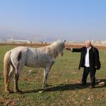 Hasankeyf'te at ve katır silahla vurulmuş halde bulundu