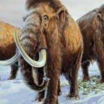 Bilim insanları mamut klonlamaya çok yaklaştı