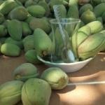 Çağla meyvesinin faydaları nelerdir? İşte doğal probiyotik kaynağı...