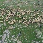 5 bin lira maaşı var ama çalışan yok! 150 bin çoban ithal edeceğiz