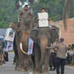 Endonezya'da seçim: Sandıkları fillerle taşıdı!