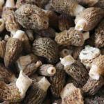Kuzugöbeği mantarının faydaları nelerdir? Hangi hastalıklara iyi gelir?