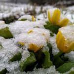 Kars'ta mayıs ayında kar yağışı