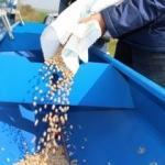 İBB, yerli nohut deneme ekimi gerçekleştirdi