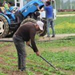 Çiftçiler hüsrana uğradı! Satamayınca tarlaya gömdüler