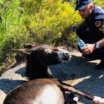 Ölüme terk edilen eşeğe Jandarma şefkati
