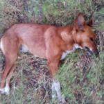 Ceviz bahçesinde 4 köpek ölüsü bulundu