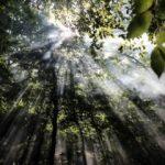 İğneada Longoz Ormanları'nda görsel şölen!