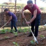 Yerli üretim için ata tohumları fide oldu