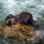 Burası Erzincan! Balık avlarken görüntülendiler