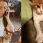 'Başbakanlık kedisini ben ezdim...'