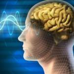 Unutkanlığı azaltan hafızayı güçlendiren besinler nelerdir?
