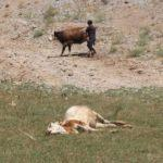 Hayvanları teker teker yere düştü: Böyle bir şeye hiç rastlamadık