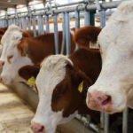 Et ve Süt Kurumu et alım fiyatında artışa gitti
