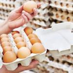 Yumurta fiyatı raflarda düşmedi