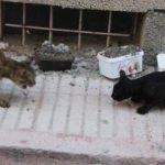 Vicdansızlık: Kedilerin mama kabını betonla doldurdular