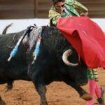 İspanya'da mahkeme eliyle boğa vahşeti!
