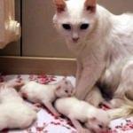 10 yavru doğuran 'Nazlı'ya ziyaretçi ilgisi