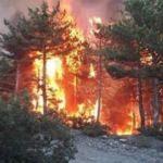 Kütahya'daki orman yangını kontrol altına alındı!