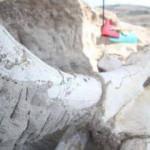 Kayseri'de bulunan mamut fosili basına tanıtıldı