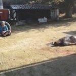 72 yaşındaki baba öz evladını öldürdü