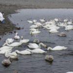 Japonya'dan Fukuşima'daki radyoaktif suyla ilgili açıklama